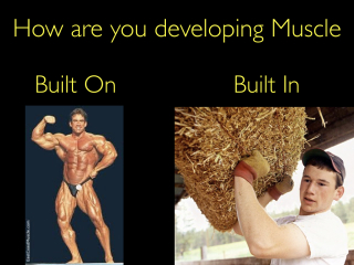 Muscles Built in or Built on.001